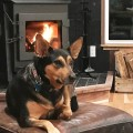 Ideal Steel Hybrid Wood Stove Honey the Dog
