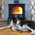 Keystone Wood Stove Sanders Dog Customer Install